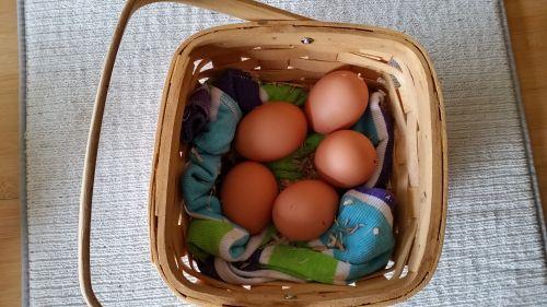 191 egg 3.jpg